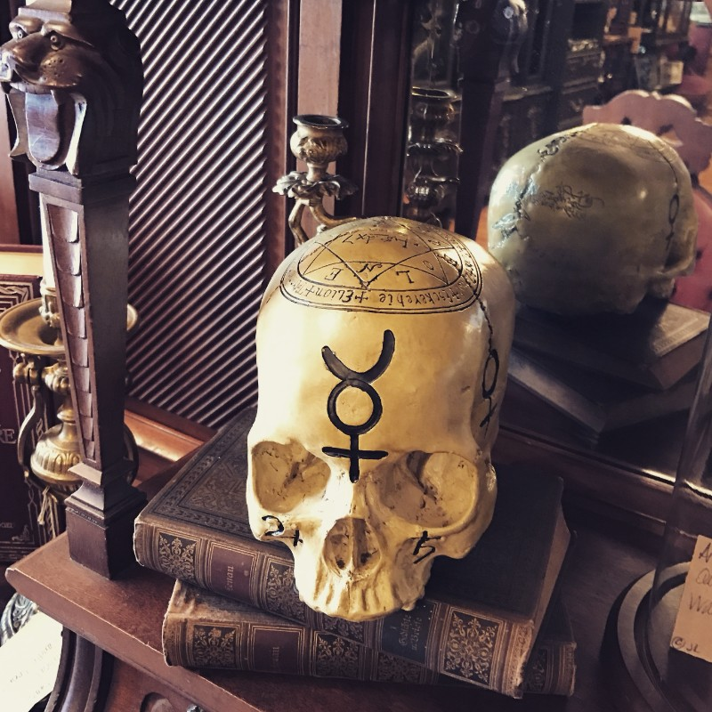 Skull and books at Alchemy and Ashes